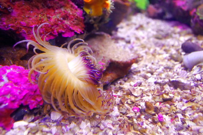 Sea Life Sydney